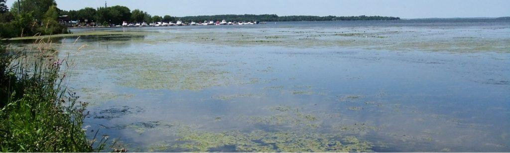 Lake Scugog - Environmental Benefits of LSEP